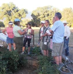 Members of the public learning about drip irrigation from Inyo-Mono Master Gardeners