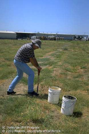 Man with buckets testing soils