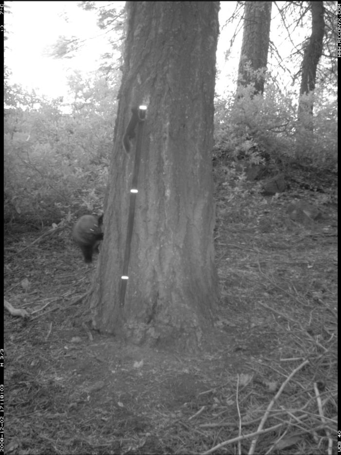 fisher_chases_squirrel_270_4148_Ck5 (3)