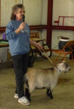 goat volunteer