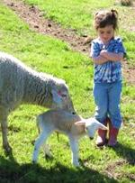 Little gal with ewes