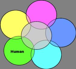Human Risk Icon