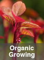 Organic Growing
