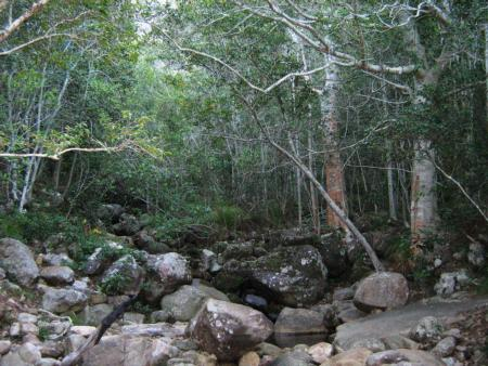Newlands_Forest_river_and_indigenous_forest_-_Cape_Town