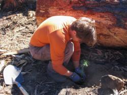 Volunteer plants seedling after 2007 Angora Fire