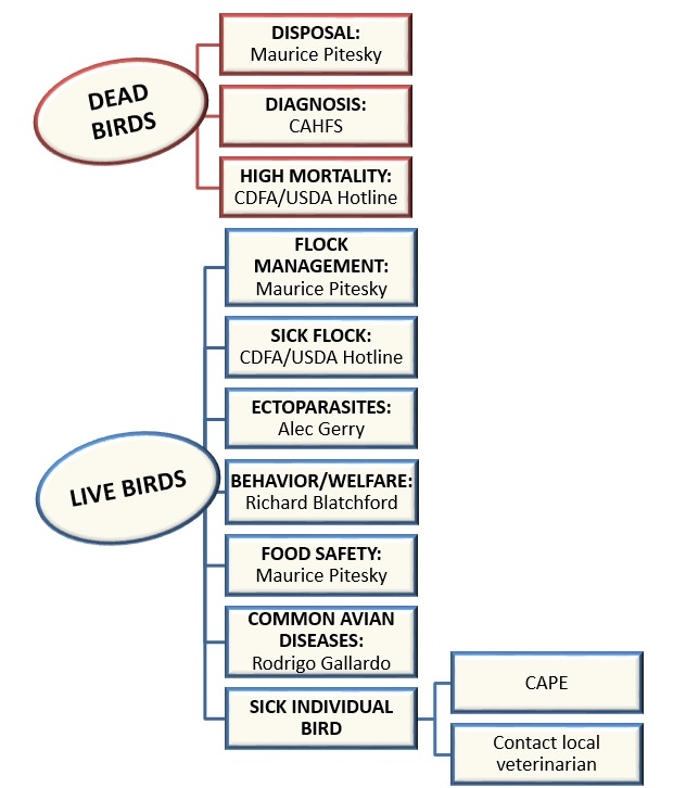 Who to Contact in Case of Poultry Issues: - Poultry