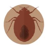bed bug 101 copy4