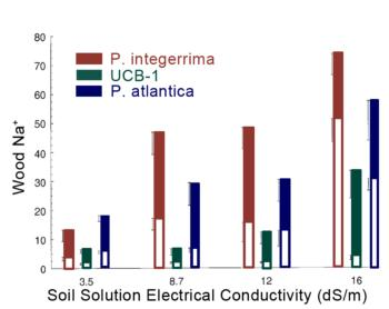 Figure 2. Partitioning of Na between scion (filled area of column) & rootstock (total length of column) on 3 rootstocks as influenced by salinity.