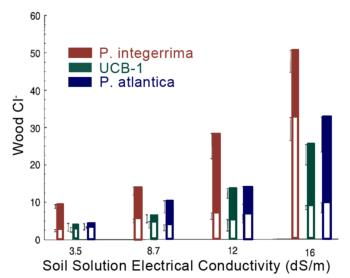 Figure 3. Partitioning of Cl between scion (filled area of column) & rootstock (total length of column) on 3 rootstocks as influenced by salinity.