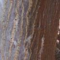 PSHB entry-holes on Coral tree (Akif Eskalen / UC Riverside)