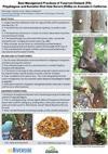avocadobestmanagementpractices_thmbnl