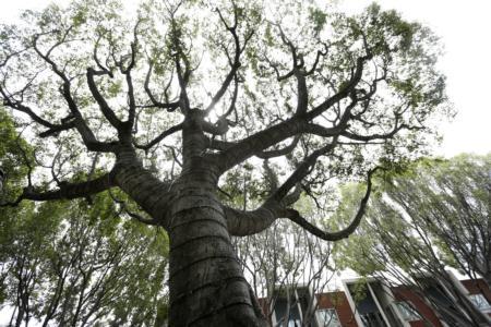 la-me-trees-change-20170427