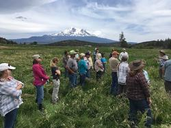 Weed Management in Riparian Areas Workshop Tour