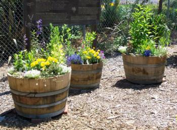 Beneficial insect barrels-1