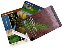 fruit pest cards