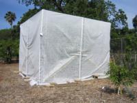 SWD FOHC tent