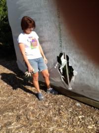 SWD tent tear