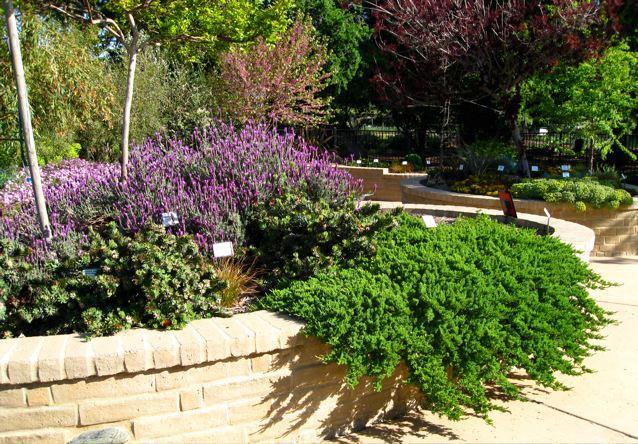 Water Efficient Landscape Gardens Sacramento Mgs