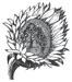 fohc flower