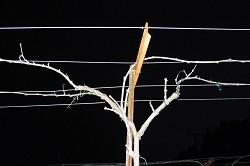 Cane Pruning