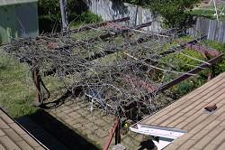 Arbor pruning