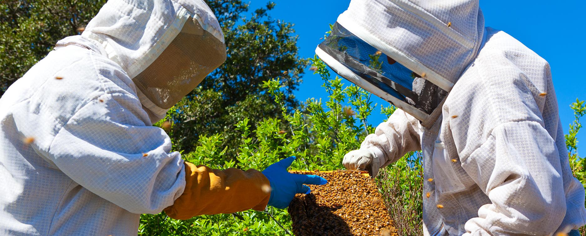 beekeeping_management_header_2