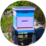 Hive Types 1-01