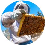 Beesuit-01