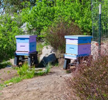 hive_location