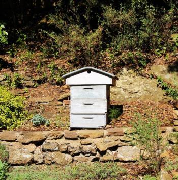 hive-1568632_960_720