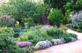 Gardening With Ca Natives Ucce Master Gardeners Of San