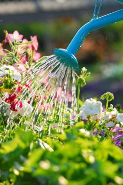 watering-can-watering-flowers