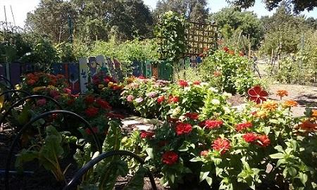 The Children's Garden in full bloom