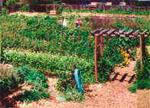 hfh garden small
