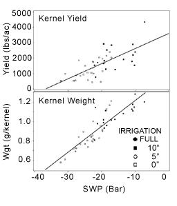 Fig. 4. SWP versus yield & kernel weight.