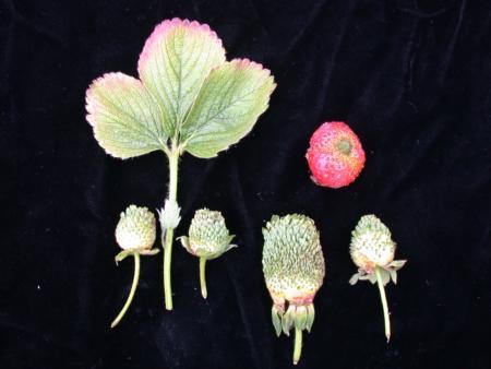 Green petal in straw