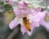 honeybee_6548[1]