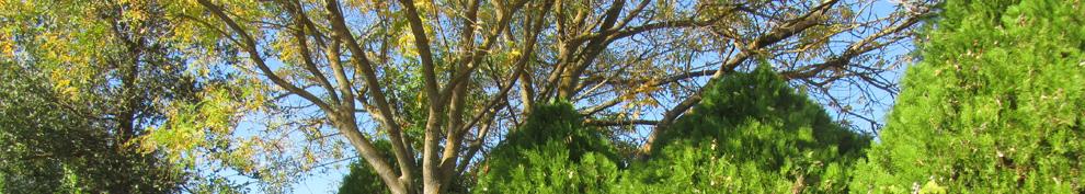 San Joaquin County Landscape Horticulture