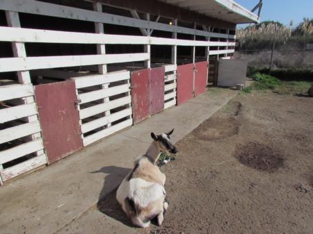 San Bruno 4-H Farm