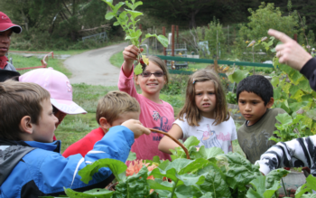Afterschool Garden Program