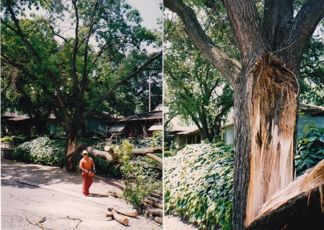 Modesto ash branch failure