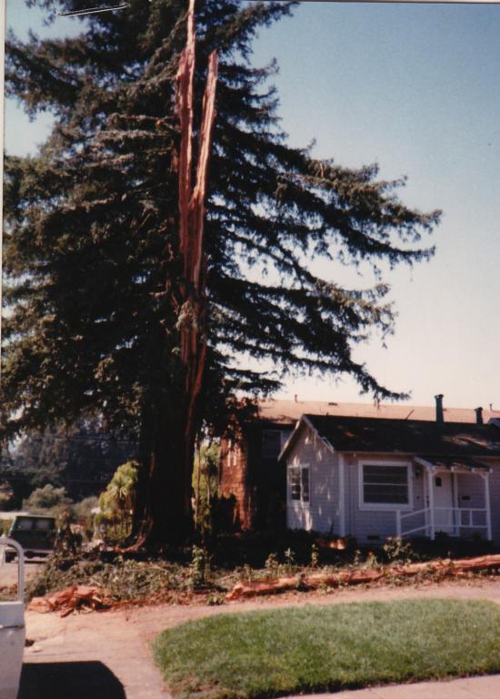 9/17/89 redwood hit by lightning