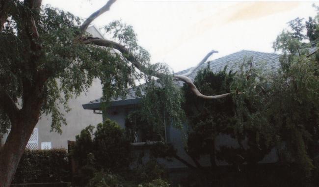 Evergreen elm branch failure