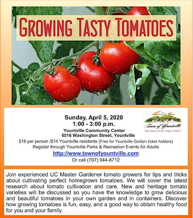 Click on: UC Master Gardeners Grow Tasty Tomatoes 2020