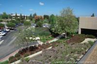 Commercial Landscape IPM