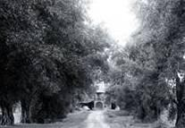 Olive avenue entrance, 1937. Photo courtesy UC Davis Special Collections.