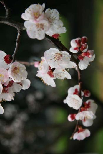 Blossoms - March 1, 2010