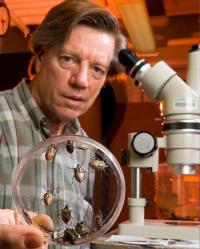 Jeff Aldrich with brown marmorated stink bugs